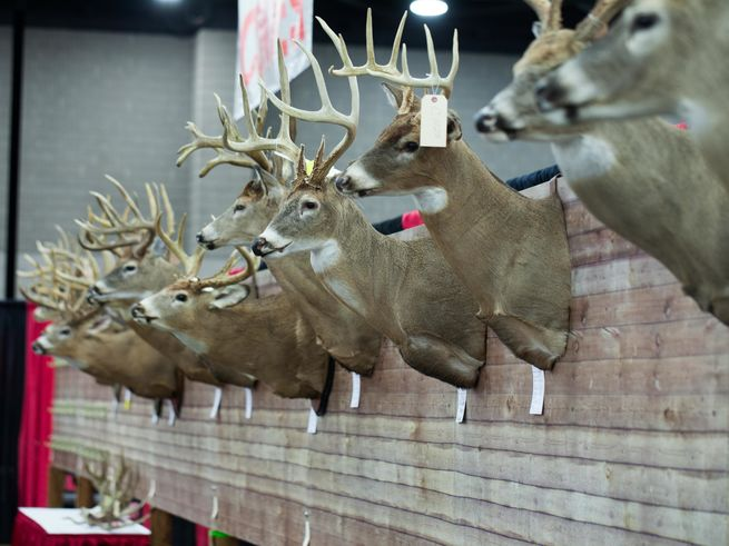 Ohio Trophy Deer Contest & Displays